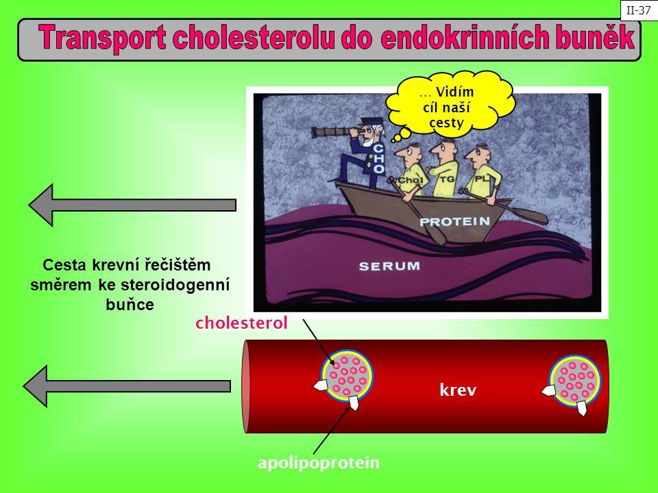krev cholesterol apolipoprotein … Vidím cíl naší cesty Cesta krevní řečištěm směrem ke steroidogenní buňce II-37