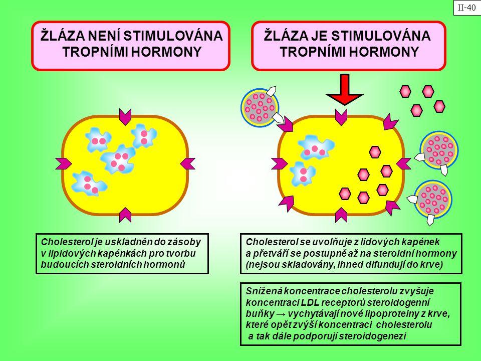 ŽLÁZA JE STIMULOVÁNA TROPNÍMI HORMONY Cholesterol se uvolňuje z lidových kapének a přetváří se postupně až na steroidní hormony (nejsou skladovány, ih