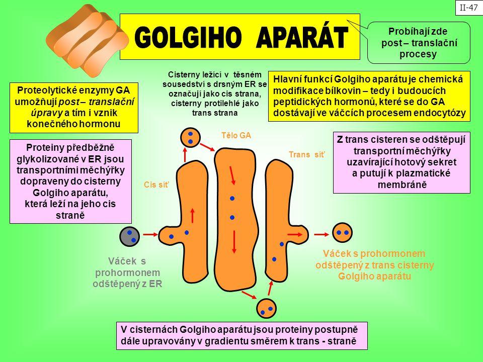 Hlavní funkcí Golgiho aparátu je chemická modifikace bílkovin – tedy i budoucích peptidických hormonů, které se do GA dostávají ve váčcích procesem en