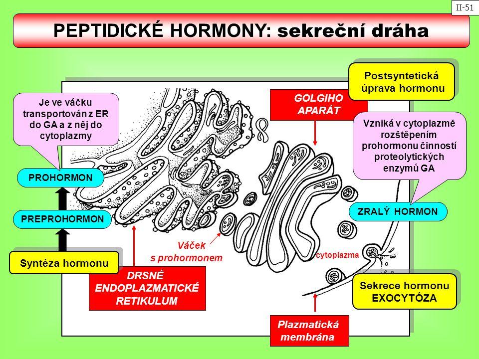 GOLGIHO APARÁT Plazmatická membrána DRSNÉ ENDOPLAZMATICKÉ RETIKULUM Váček s prohormonem Syntéza hormonu Sekrece hormonu EXOCYTÓZA Sekrece hormonu EXOC