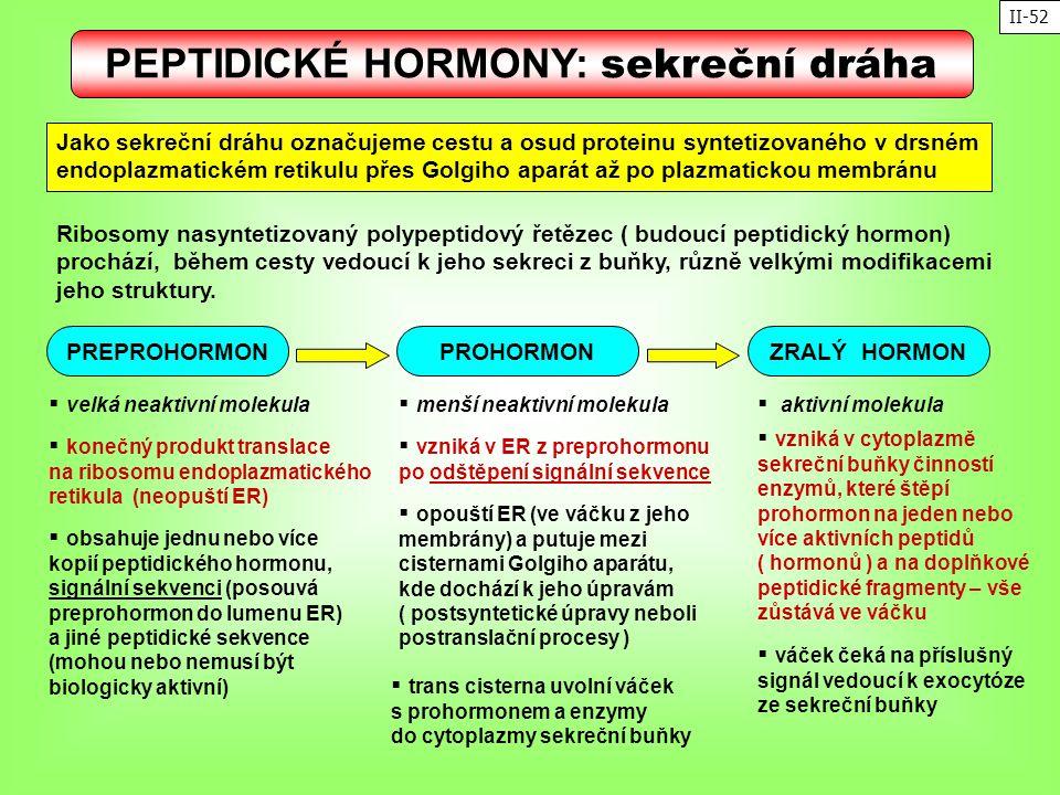 PEPTIDICKÉ HORMONY: sekreční dráha Jako sekreční dráhu označujeme cestu a osud proteinu syntetizovaného v drsném endoplazmatickém retikulu přes Golgih