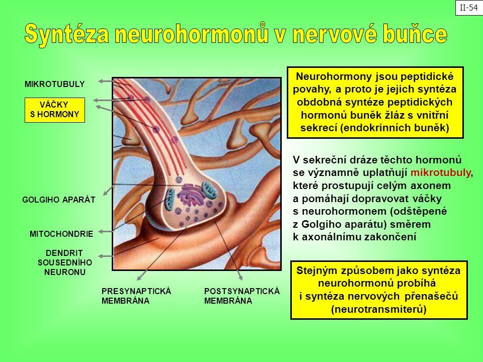 POSTSYNAPTICKÁ MEMBRÁNA PRESYNAPTICKÁ MEMBRÁNA MIKROTUBULY VÁČKY S HORMONY MITOCHONDRIE GOLGIHO APARÁT DENDRIT SOUSEDNÍHO NEURONU Neurohormony jsou pe