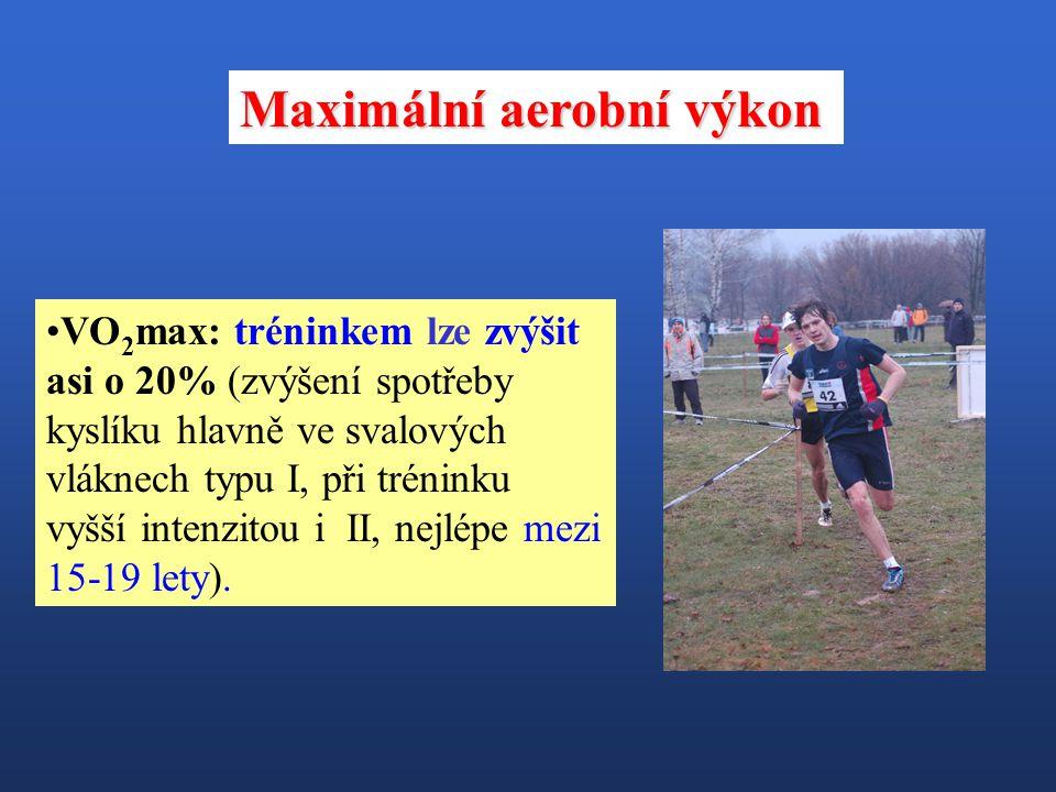 VO 2 max: tréninkem lze zvýšit asi o 20% (zvýšení spotřeby kyslíku hlavně ve svalových vláknech typu I, při tréninku vyšší intenzitou i II, nejlépe me