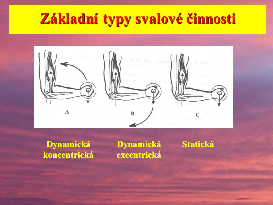 Důležité mj. je vyjít ze znalosti typů svalové činnosti. Dva základní přístupy k členění svalové činnosti: A) a)překonávající b)udržující c)ustupující