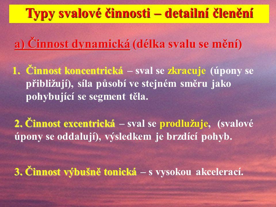 Základní typy svalové činnosti Dynamická koncentrická Dynamická excentrická Statická