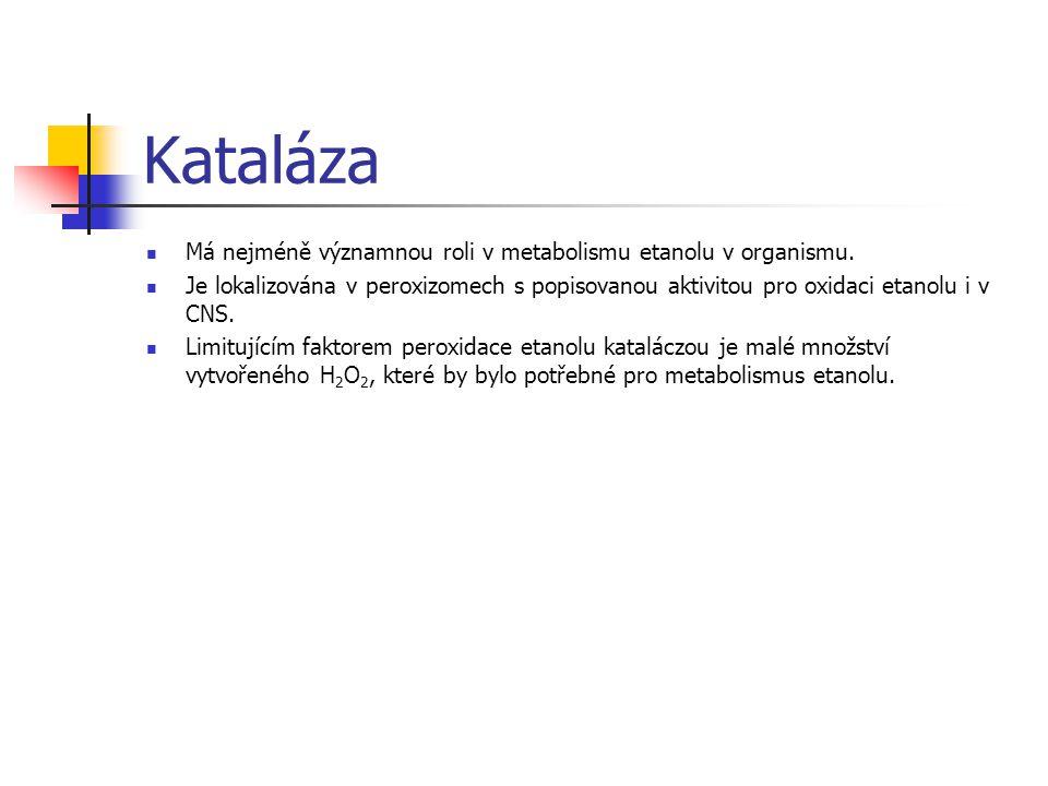 Kataláza Má nejméně významnou roli v metabolismu etanolu v organismu. Je lokalizována v peroxizomech s popisovanou aktivitou pro oxidaci etanolu i v C