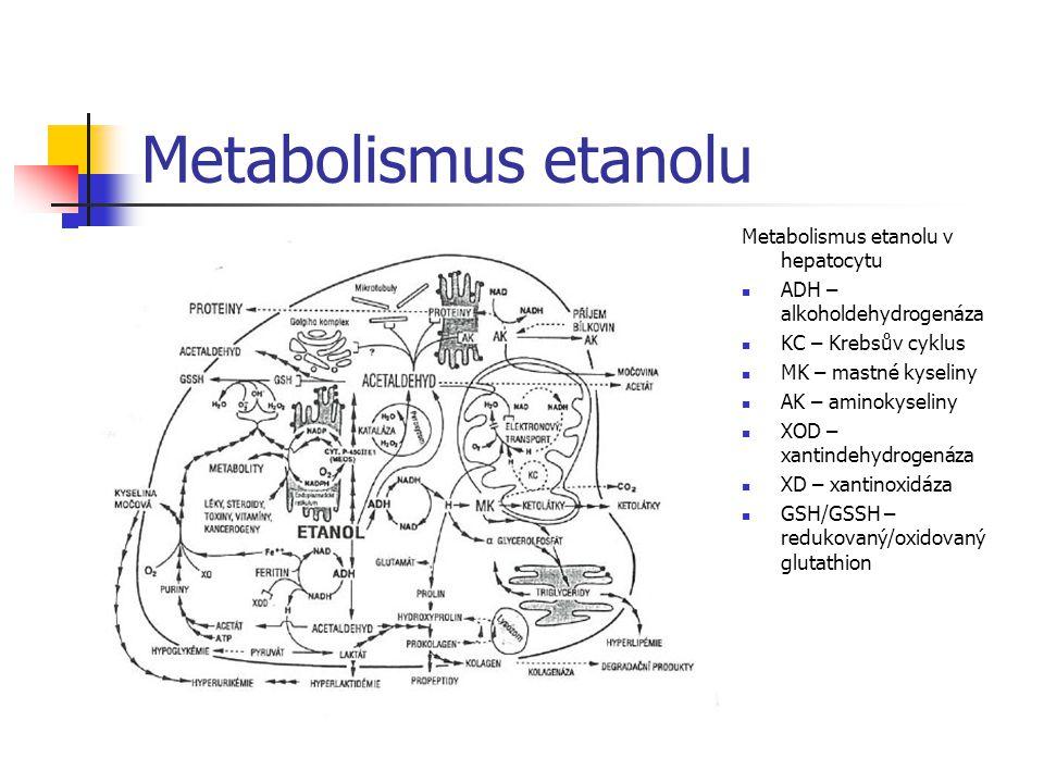 Metabolismus etanolu Metabolismus etanolu v hepatocytu ADH – alkoholdehydrogenáza KC – Krebsův cyklus MK – mastné kyseliny AK – aminokyseliny XOD – xa