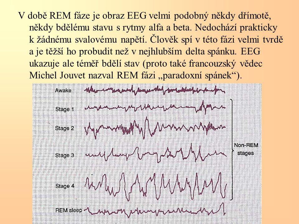 V době REM fáze je obraz EEG velmi podobný někdy dřímotě, někdy bdělému stavu s rytmy alfa a beta. Nedochází prakticky k žádnému svalovému napětí. Člo