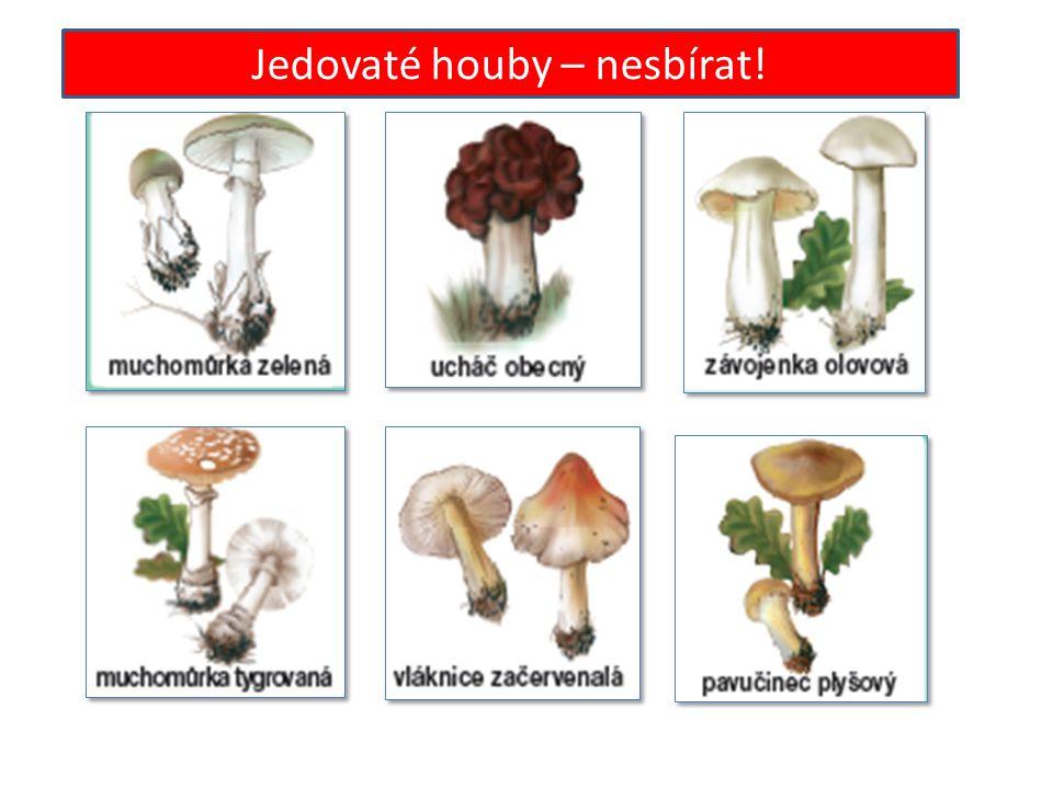 Jedovaté houby – nesbírat!