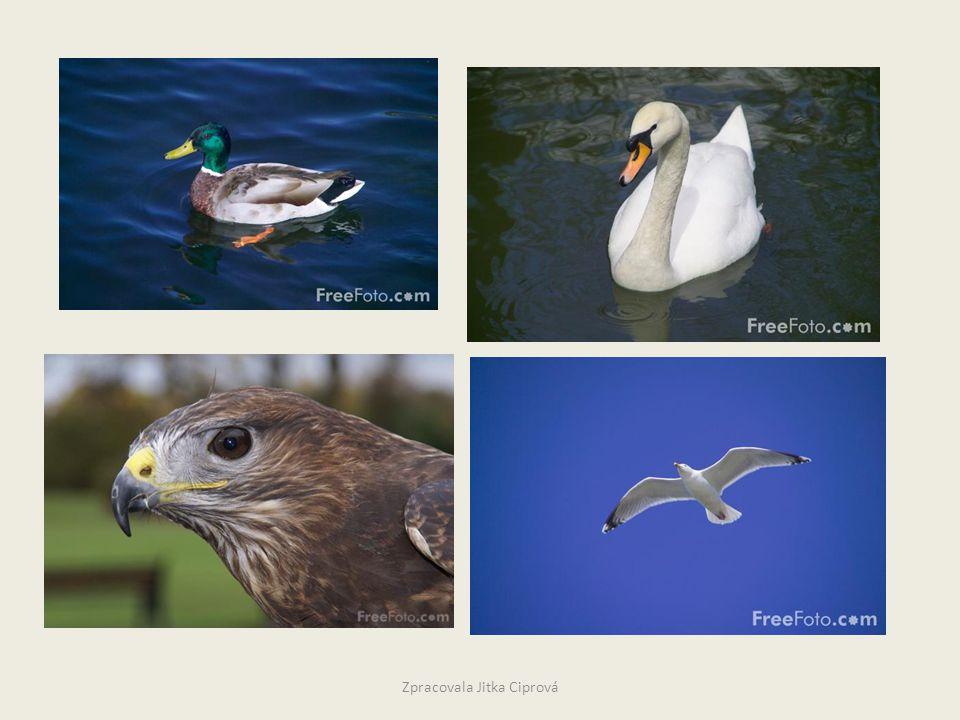 Dopiš,co vše víš o ptácích. Myšlenková mapa Zpracovala Jitka Ciprová