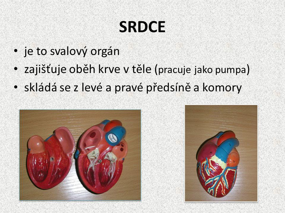 SRDCE je to svalový orgán zajišťuje oběh krve v těle ( pracuje jako pumpa ) skládá se z levé a pravé předsíně a komory