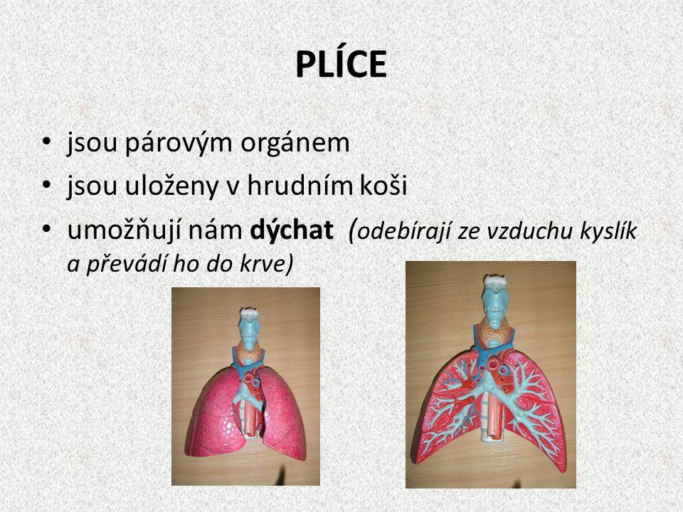 PLÍCE jsou párovým orgánem jsou uloženy v hrudním koši umožňují nám dýchat ( odebírají ze vzduchu kyslík a převádí ho do krve)