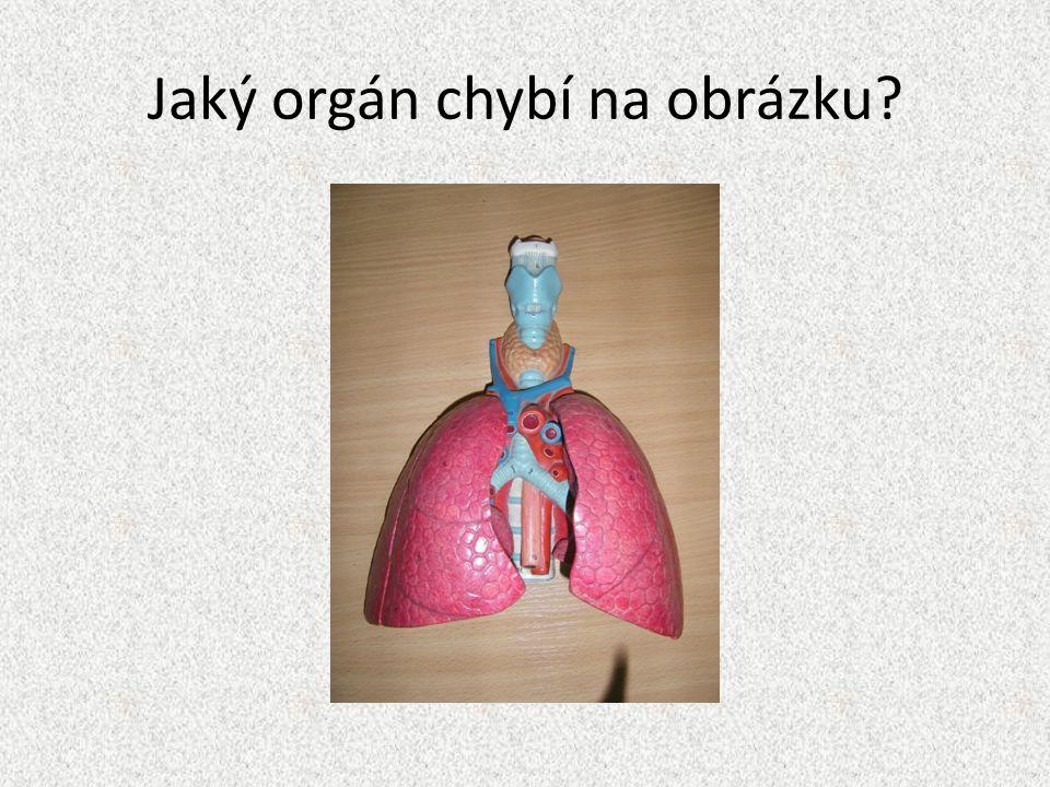 Jaký orgán chybí na obrázku?