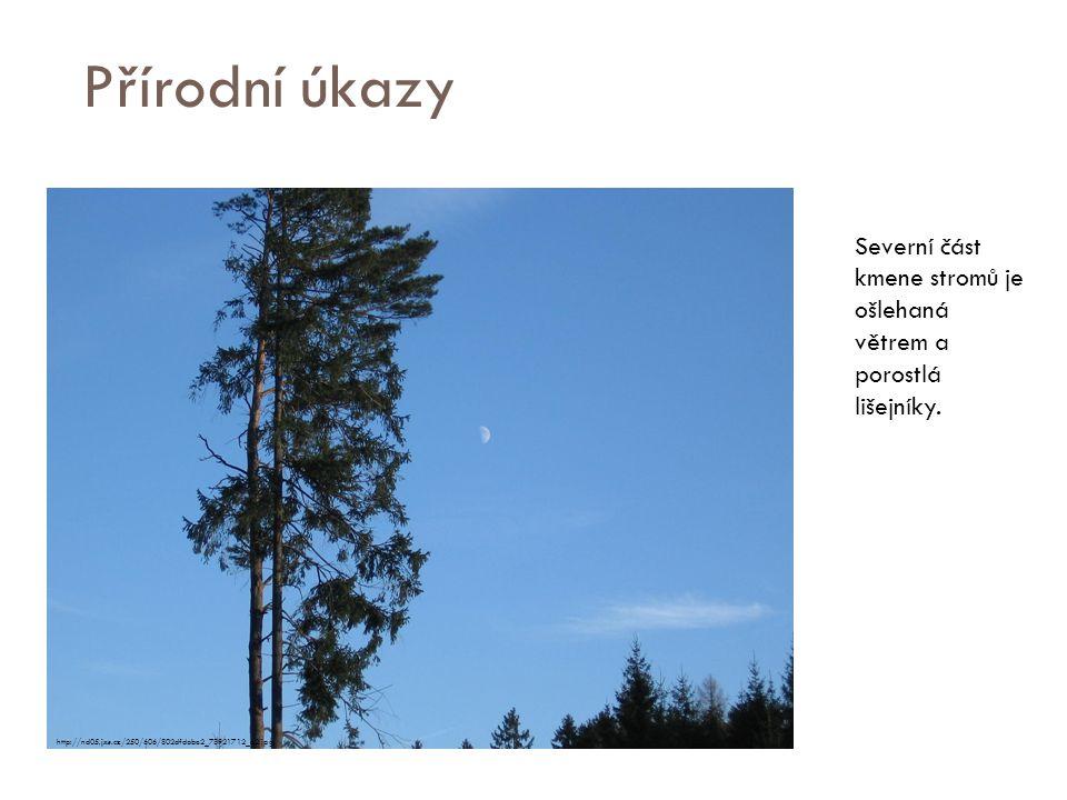 Přírodní úkazy Severní část kmene stromů je ošlehaná větrem a porostlá lišejníky. http://nd05.jxs.cz/250/606/802dfdabe2_78921712_o2.jpg