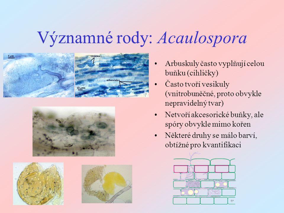 Významné rody: Acaulospora Arbuskuly často vyplňují celou buňku (cihličky) Často tvoří vesikuly (vnitrobuněčné, proto obvykle nepravidelný tvar) Netvo