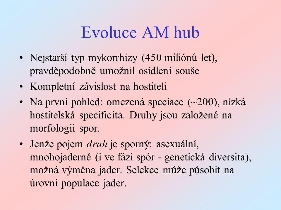 Evoluce AM hub Nejstarší typ mykorrhizy (450 miliónů let), pravděpodobně umožnil osídlení souše Kompletní závislost na hostiteli Na první pohled: omez