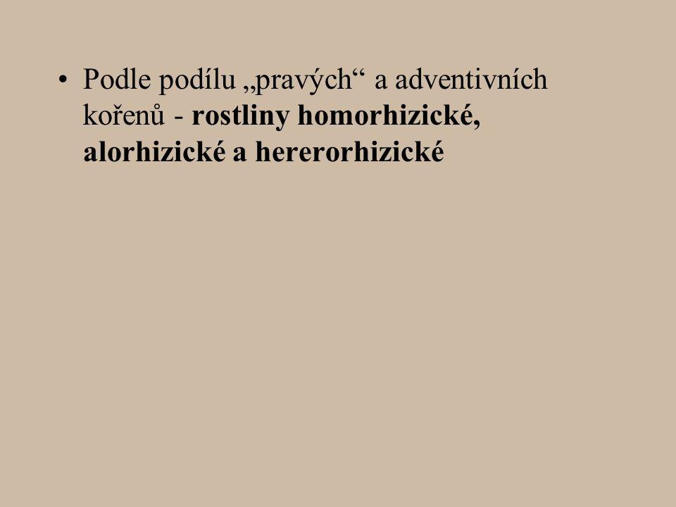 """Podle podílu """"pravých a adventivních kořenů - rostliny homorhizické, alorhizické a hererorhizické"""