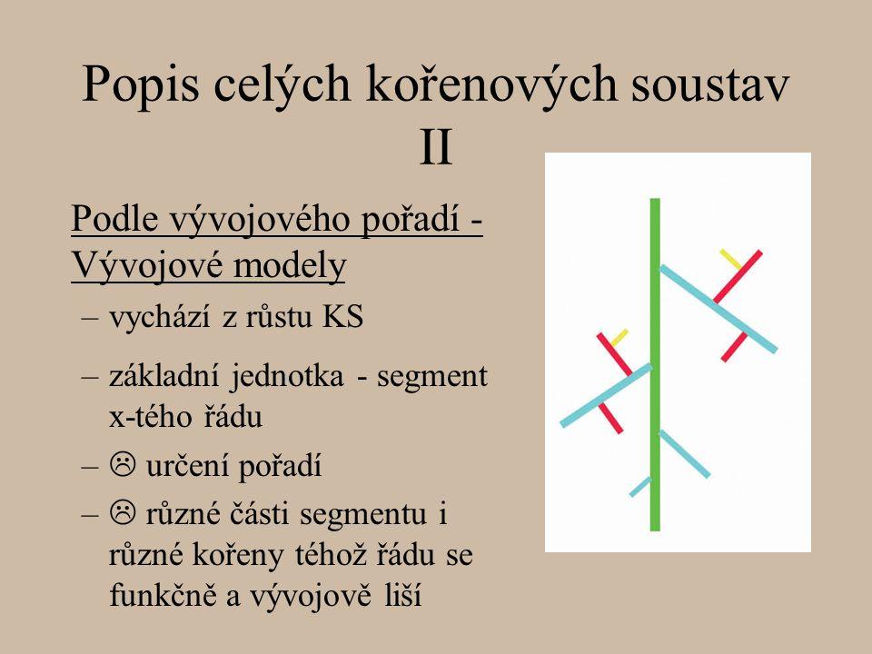 Podle vývojového pořadí - Vývojové modely –vychází z růstu KS Popis celých kořenových soustav II –základní jednotka - segment x-tého řádu –  určení pořadí –  různé části segmentu i různé kořeny téhož řádu se funkčně a vývojově liší