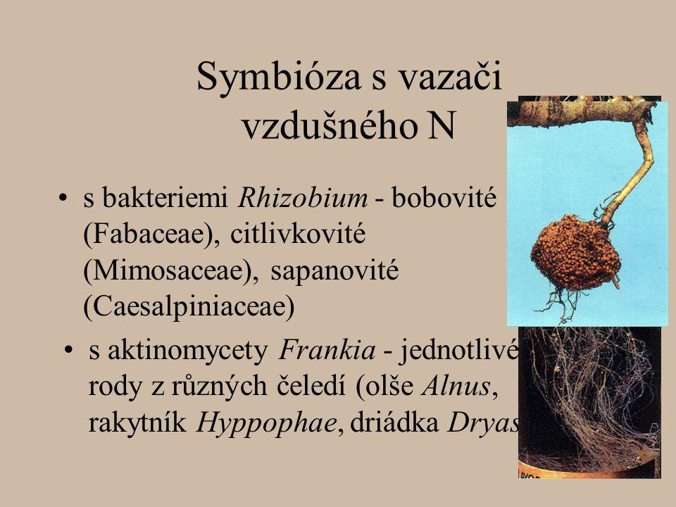 Symbióza s vazači vzdušného N s aktinomycety Frankia - jednotlivé rody z různých čeledí (olše Alnus, rakytník Hyppophae, driádka Dryas) s bakteriemi Rhizobium - bobovité (Fabaceae), citlivkovité (Mimosaceae), sapanovité (Caesalpiniaceae)