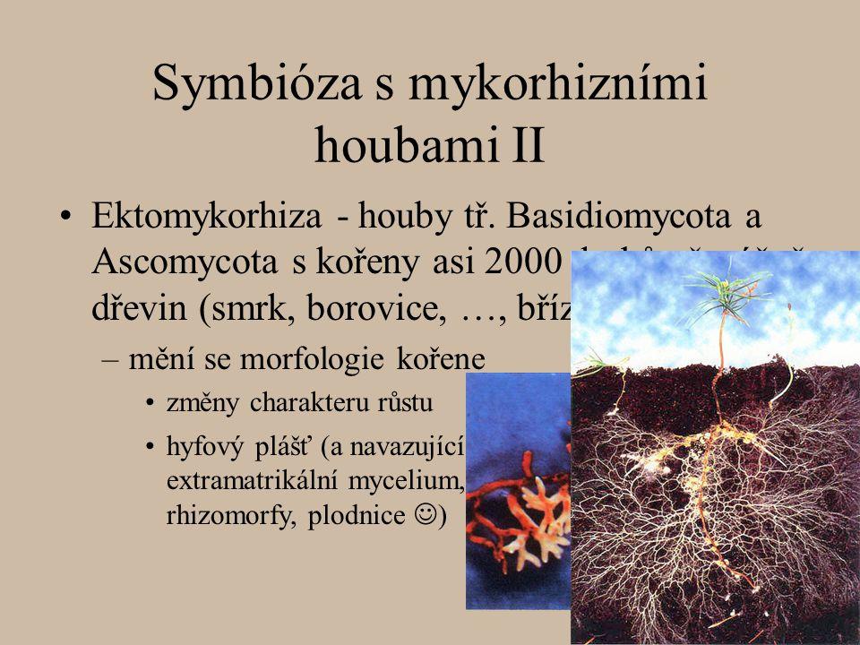 Symbióza s mykorhizními houbami II Ektomykorhiza - houby tř.