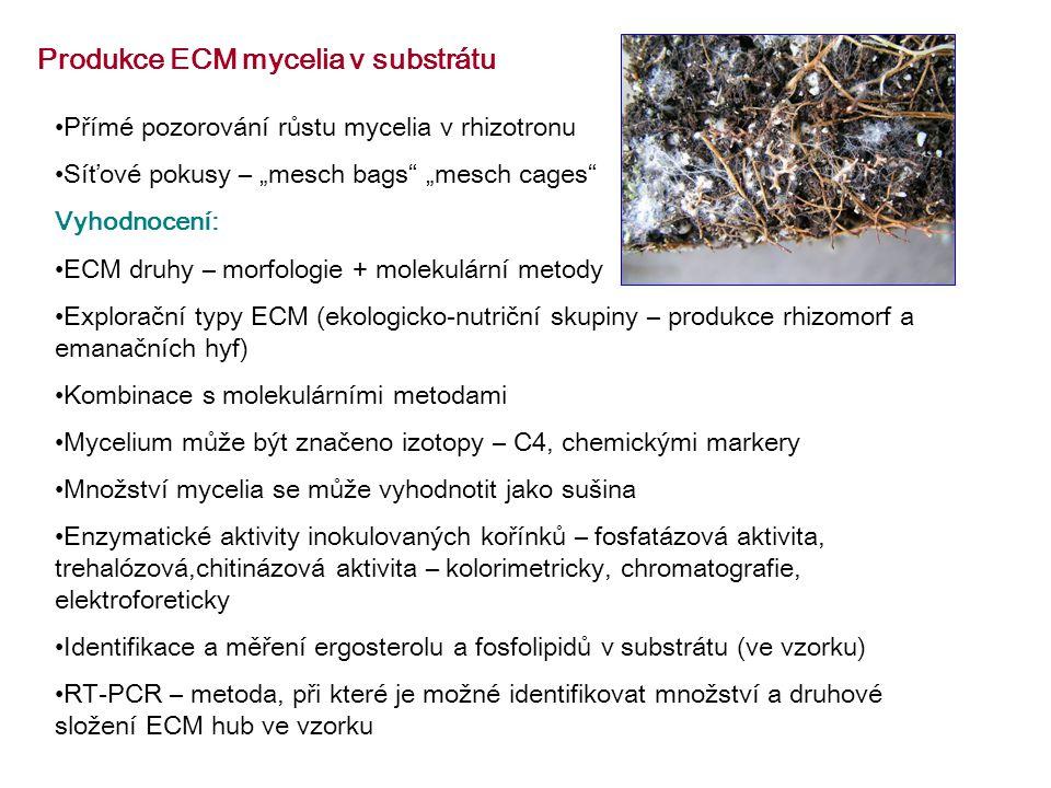 """Produkce ECM mycelia v substrátu Přímé pozorování růstu mycelia v rhizotronu Síťové pokusy – """"mesch bags """"mesch cages Vyhodnocení: ECM druhy – morfologie + molekulární metody Explorační typy ECM (ekologicko-nutriční skupiny – produkce rhizomorf a emanačních hyf) Kombinace s molekulárními metodami Mycelium může být značeno izotopy – C4, chemickými markery Množství mycelia se může vyhodnotit jako sušina Enzymatické aktivity inokulovaných kořínků – fosfatázová aktivita, trehalózová,chitinázová aktivita – kolorimetricky, chromatografie, elektroforeticky Identifikace a měření ergosterolu a fosfolipidů v substrátu (ve vzorku) RT-PCR – metoda, při které je možné identifikovat množství a druhové složení ECM hub ve vzorku"""