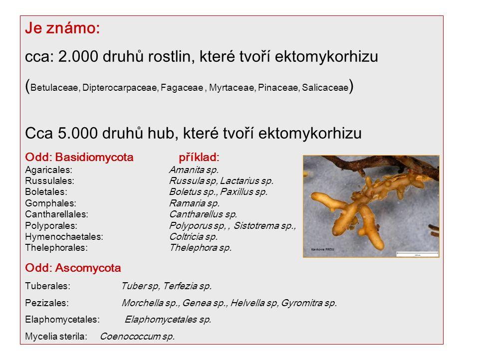 Je známo: cca: 2.000 druhů rostlin, které tvoří ektomykorhizu ( Betulaceae, Dipterocarpaceae, Fagaceae, Myrtaceae, Pinaceae, Salicaceae ) Cca 5.000 druhů hub, které tvoří ektomykorhizu Odd: Basidiomycota příklad: Agaricales: Amanita sp.