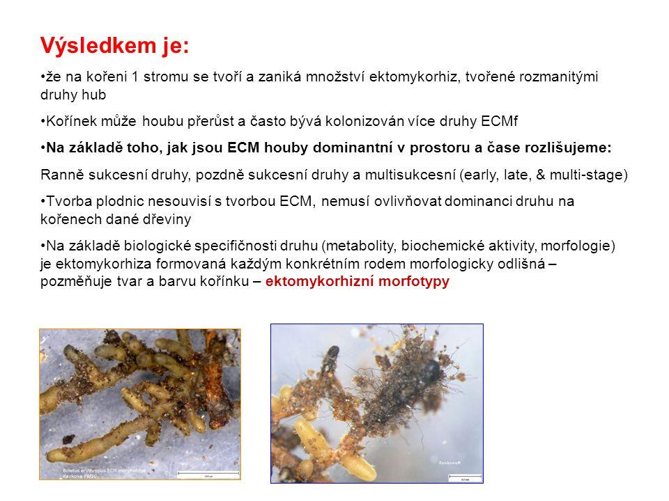 Výsledkem je: že na kořeni 1 stromu se tvoří a zaniká množství ektomykorhiz, tvořené rozmanitými druhy hub Kořínek může houbu přerůst a často bývá kolonizován více druhy ECMf Na základě toho, jak jsou ECM houby dominantní v prostoru a čase rozlišujeme: Ranně sukcesní druhy, pozdně sukcesní druhy a multisukcesní (early, late, & multi-stage) Tvorba plodnic nesouvisí s tvorbou ECM, nemusí ovlivňovat dominanci druhu na kořenech dané dřeviny Na základě biologické specifičnosti druhu (metabolity, biochemické aktivity, morfologie) je ektomykorhiza formovaná každým konkrétním rodem morfologicky odlišná – pozměňuje tvar a barvu kořínku – ektomykorhizní morfotypy