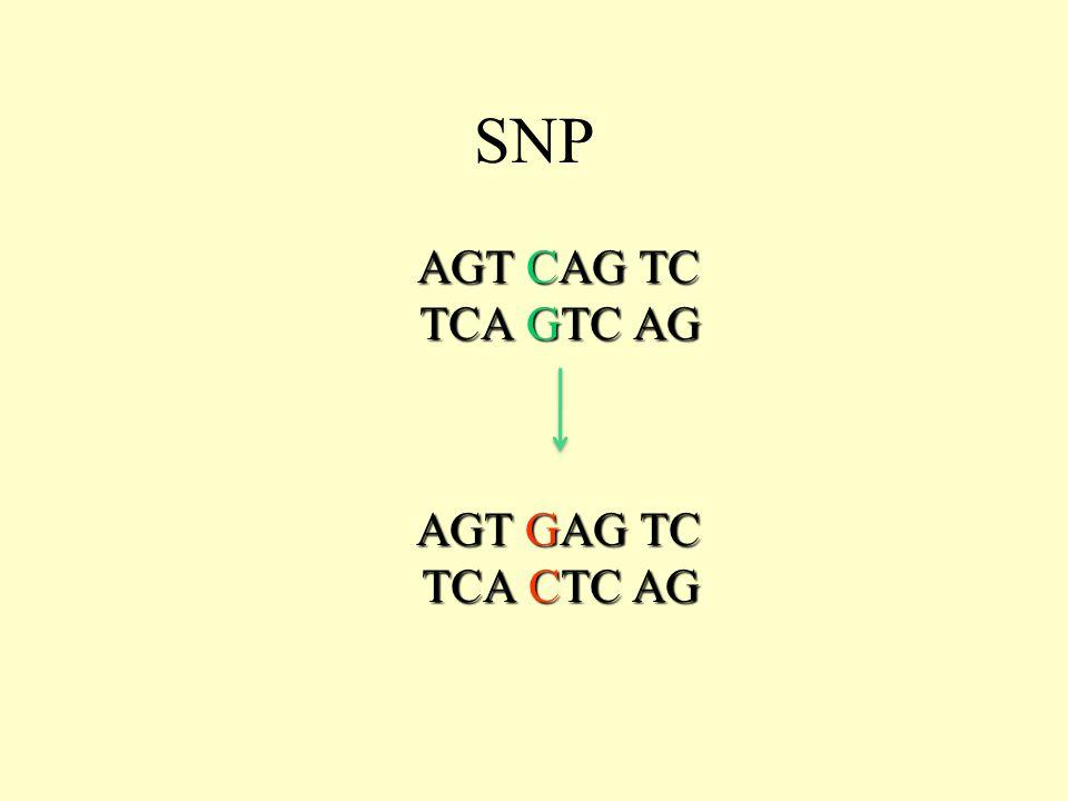 AGT CAG TC TCA GTC AG AGT CAG TC TCA GTC AG AGT GAG TC TCA CTC AG AGT GAG TC TCA CTC AG