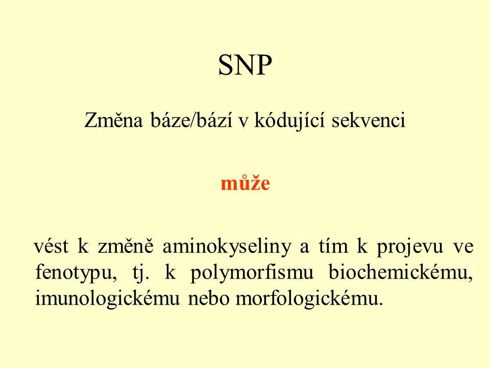 SNP Změna báze/bází v kódující sekvenci může vést k změně aminokyseliny a tím k projevu ve fenotypu, tj.