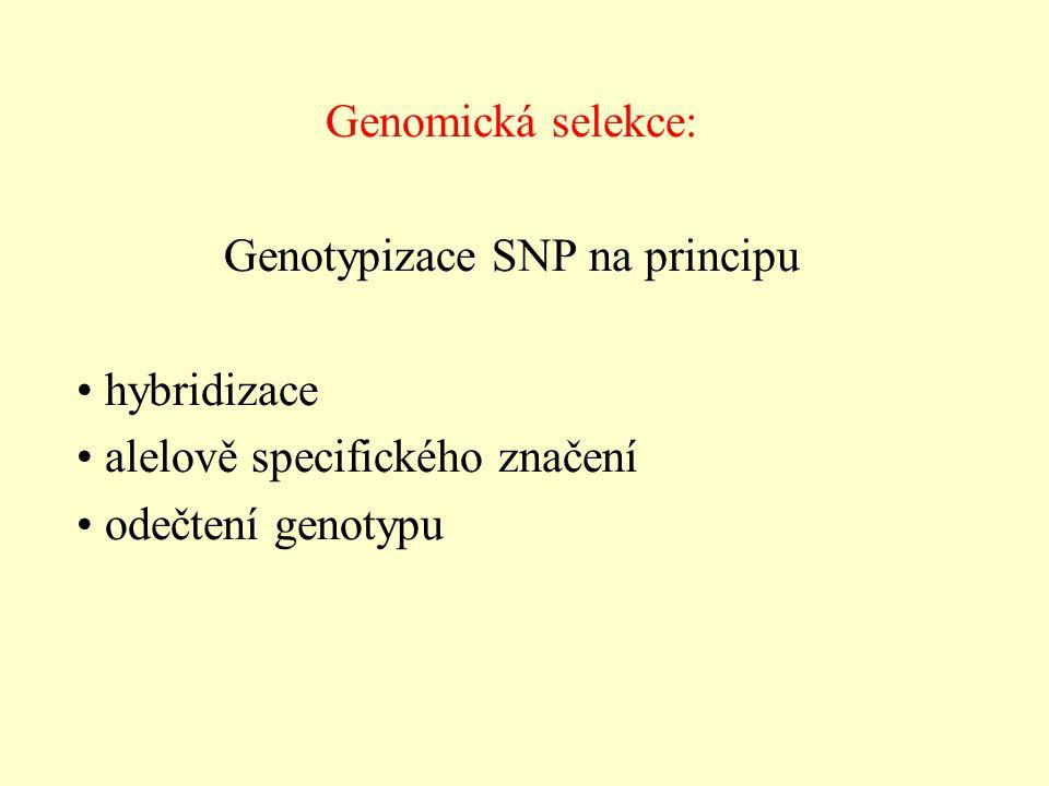 Genomická selekce: Genotypizace SNP na principu hybridizace alelově specifického značení odečtení genotypu