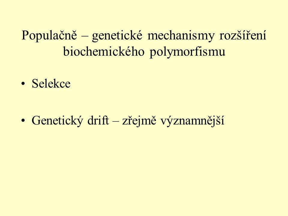Populačně – genetické mechanismy rozšíření biochemického polymorfismu Selekce Genetický drift – zřejmě významnější