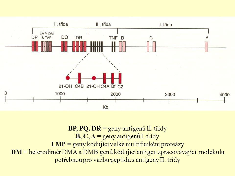 BP, PQ, DR = geny antigenů II.třídy B, C, A = geny antigenů I.