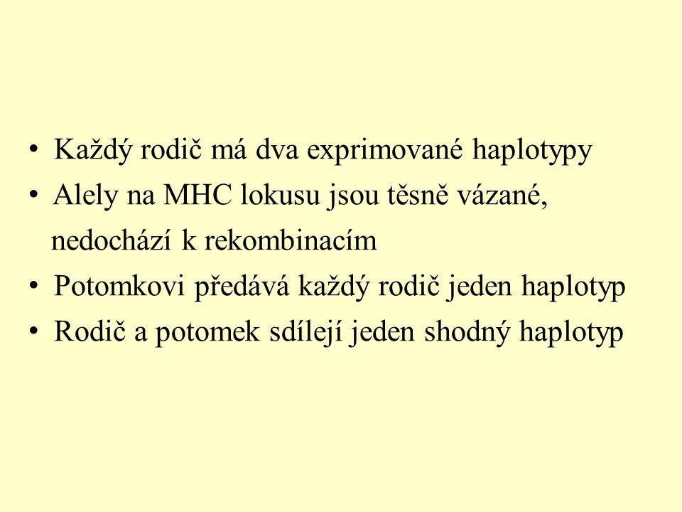 Každý rodič má dva exprimované haplotypy Alely na MHC lokusu jsou těsně vázané, nedochází k rekombinacím Potomkovi předává každý rodič jeden haplotyp Rodič a potomek sdílejí jeden shodný haplotyp