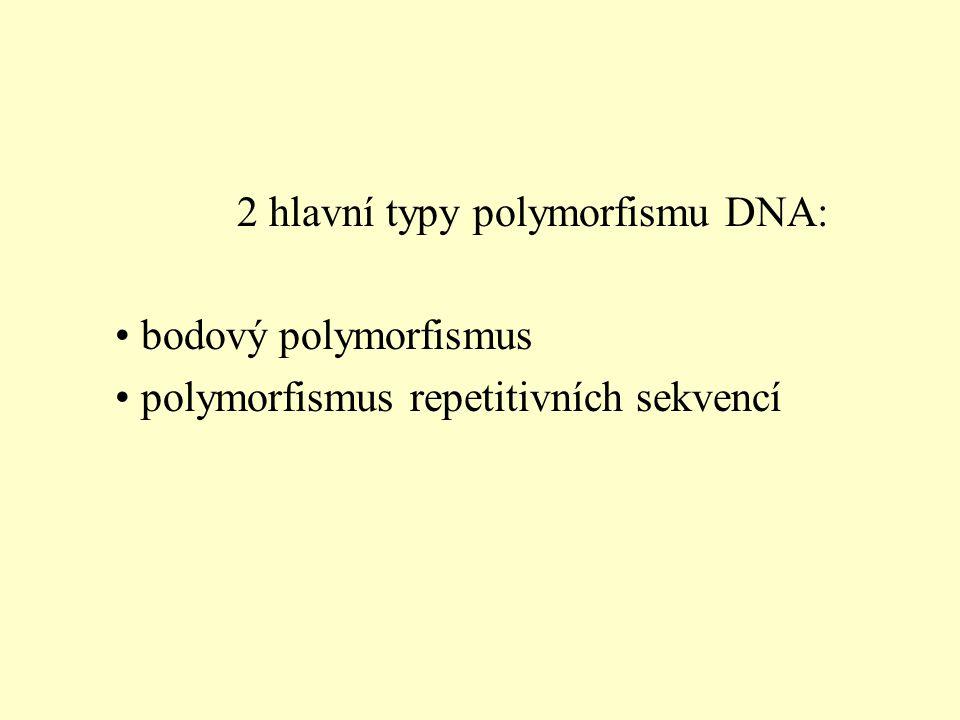 2 hlavní typy polymorfismu DNA: bodový polymorfismus polymorfismus repetitivních sekvencí