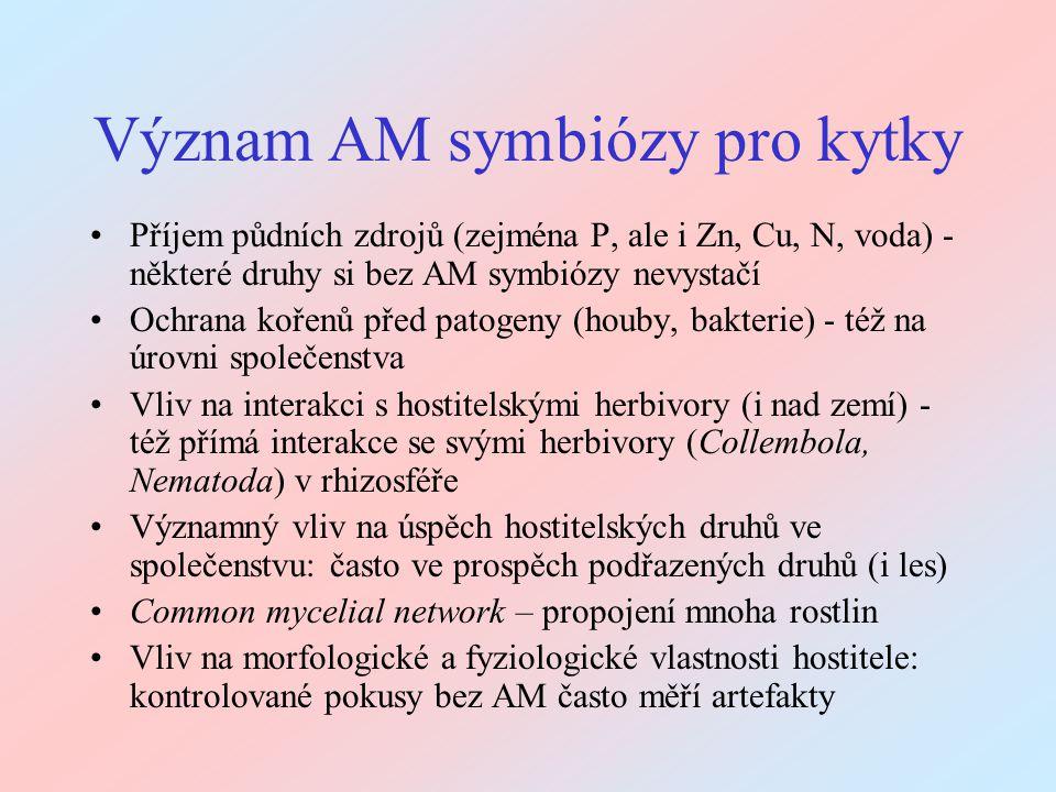 Význam AM symbiózy pro kytky Příjem půdních zdrojů (zejména P, ale i Zn, Cu, N, voda) - některé druhy si bez AM symbiózy nevystačí Ochrana kořenů před
