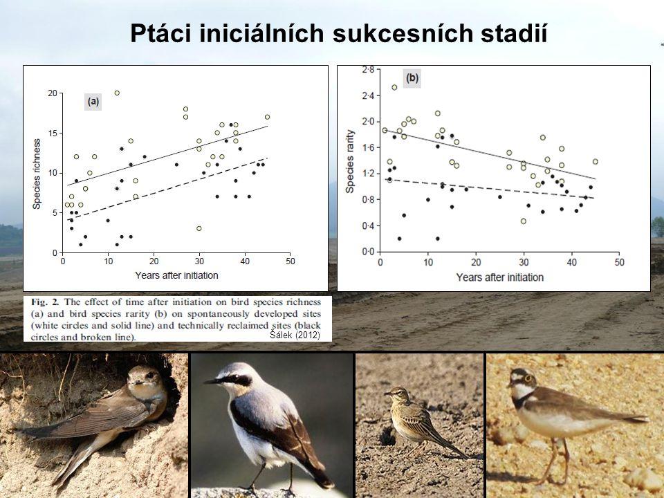 Ptáci iniciálních sukcesních stadií Šálek (2012)