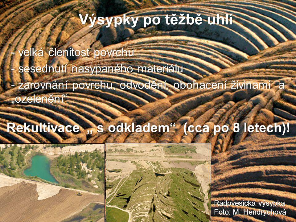 Spontánní sukcese Suchá oblast (Mostecko) Vlhčí oblast (Sokolovsko) Do 5 let -jednoletky (lebedy, merlíky, rdesna) - vytrvalé druhy (podběl, ruderály) - dvouletky (bodlák obecný) - trávy (třtina křovištní) - vzácné druhy (lebeda růžová, KO) 5- 15 let - vytrvalé širokolisté byliny - dřeviny (bříza, jíva, osika ) (vratič obecný, pelyněk černobýl) - trávy (pýr plazivý, třtina křovištní, ovsík vyvýšený) od 15 roku -dřeviny (bříza, bez černý, klen, jíva, jasan, růže, hloh) - souvislý vegetační kryt, luční druhy po 20 roce -lesostepní mozaika - převaha lučních a lesních druhů (pokryvnost dřevin do 30%) (i vstavačovité a hruštičkovité) - ústup ruderálních druhů po 40 letech - lesostepní mozaika (pokryvnost i 50%) -prosvětlené lesní porosty