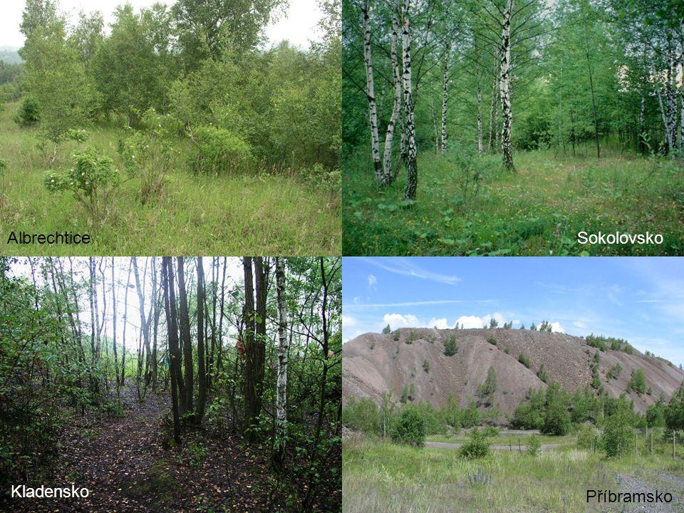 Vlhká stanoviště - dominuje rákos a orobinec - výskyt vzácnějších a zajímavých druhů řas