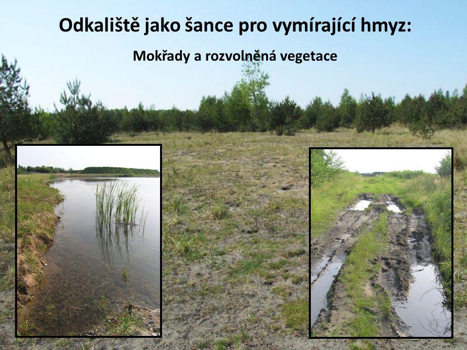 Odkaliště jako šance pro vymírající hmyz: Mokřady a rozvolněná vegetace