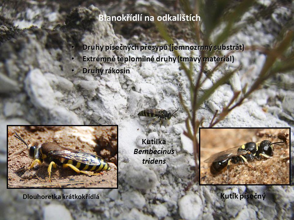 Blanokřídlí na odkalištích Druhy písečných přesypů (jemnozrnný substrát) Druhy písečných přesypů (jemnozrnný substrát) Extrémně teplomilné druhy (tmav