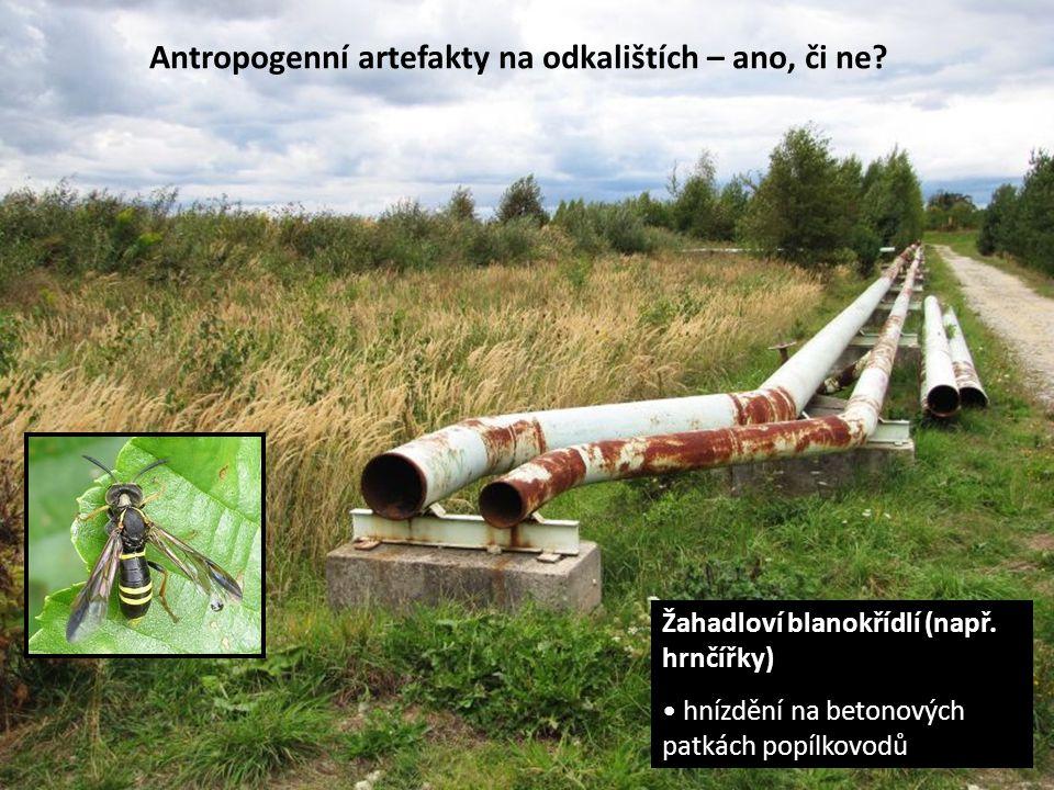 Antropogenní artefakty na odkalištích – ano, či ne? Žahadloví blanokřídlí (např. hrnčířky) hnízdění na betonových patkách popílkovodů
