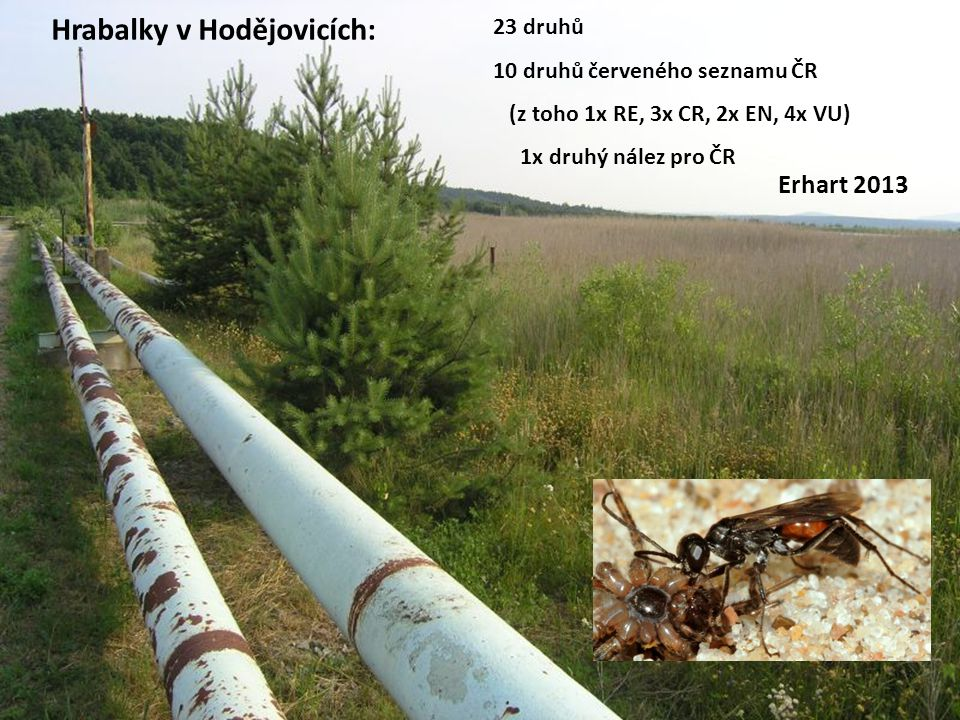 Hrabalky v Hodějovicích: 23 druhů 10 druhů červeného seznamu ČR (z toho 1x RE, 3x CR, 2x EN, 4x VU) 1x druhý nález pro ČR Erhart 2013