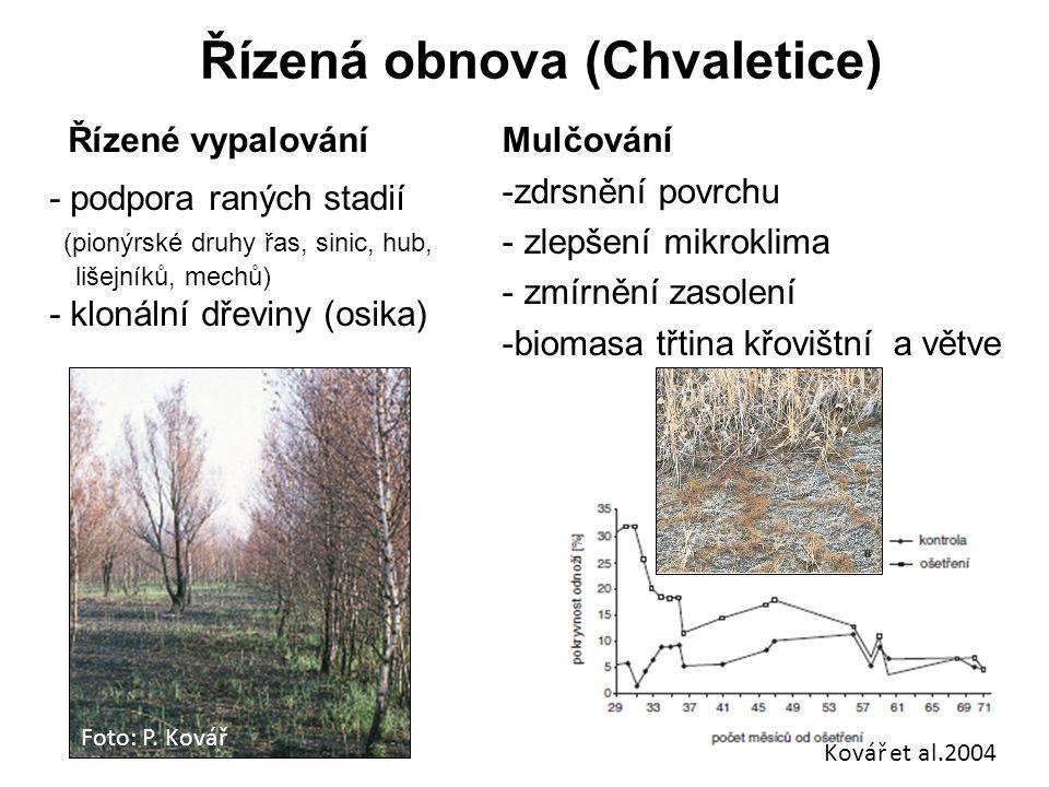 Řízená obnova (Chvaletice) Kovář et al.2004 Řízené vypalování - podpora raných stadií (pionýrské druhy řas, sinic, hub, lišejníků, mechů) - klonální d