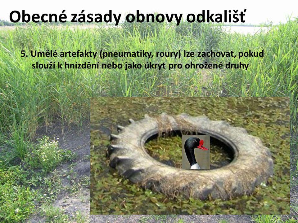 Obecné zásady obnovy odkališť 5. Umělé artefakty (pneumatiky, roury) lze zachovat, pokud slouží k hnízdění nebo jako úkryt pro ohrožené druhy