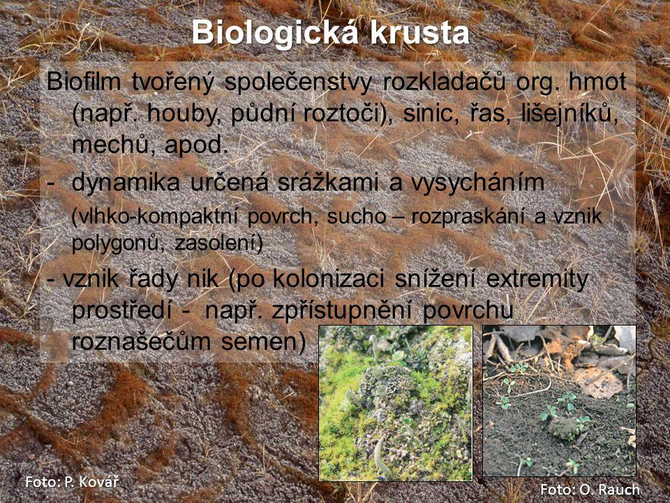 Biologická krusta Biofilm tvořený společenstvy rozkladačů org. hmot (např. houby, půdní roztoči), sinic, řas, lišejníků, mechů, apod. -dynamika určená