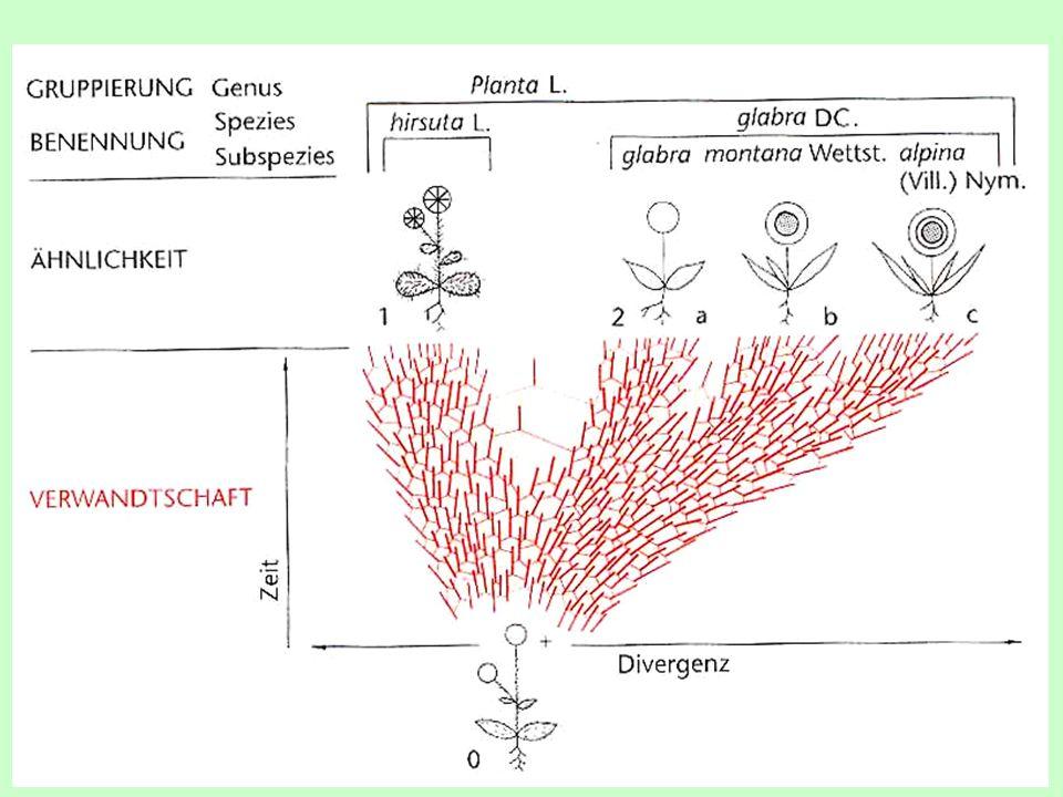 Zdroje variability  nic není zcela stejné (často ani vegetativně se rozmnožující typy)  jaderná a nejaderná dědičnost  novou kvalitu přináší mutace a genetické rekombinace *mutace vznikají ve všech složkách genotypu *mutace v DNA delece, duplikace, inverze, traslokace *nejčastějšími mutacemi u rostlin jsou genomové a chromozómové mutace *změna počtu chromozómů (polyploidizace); *zlomení a fúze zlomků při překřížení (aneuploidie); *chybný crossing-over – částí chromozómů  tok genů