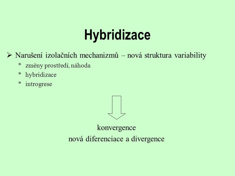 Hybridizace  Narušení izolačních mechanizmů – nová struktura variability *změny prostředí, náhoda *hybridizace *introgrese konvergence nová diferenci
