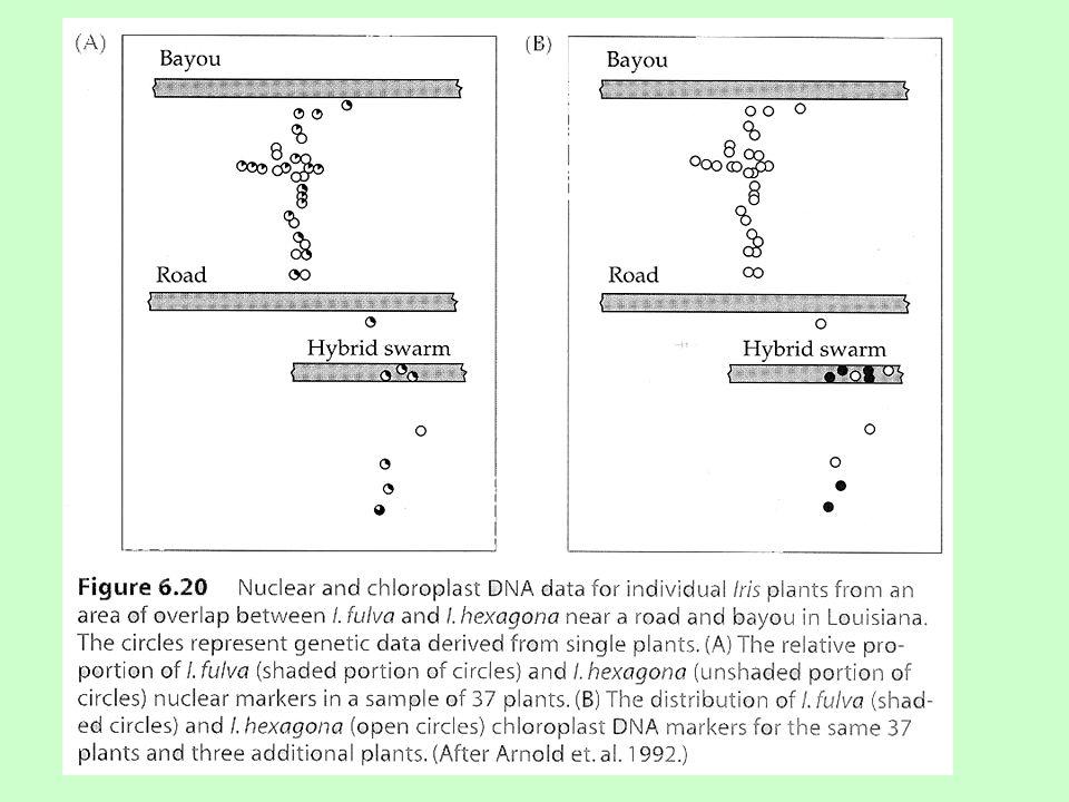 Saltační speciace  polyploidie (auto, allo)  změny počtu chromozómů a jejich přestavby