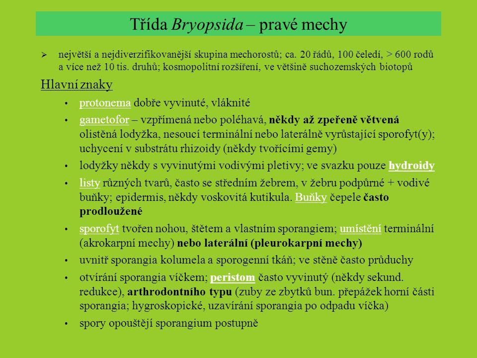 Třída Bryopsida – pravé mechy  největší a nejdiverzifikovanější skupina mechorostů; ca. 20 řádů, 100 čeledí, > 600 rodů a více než 10 tis. druhů; kos