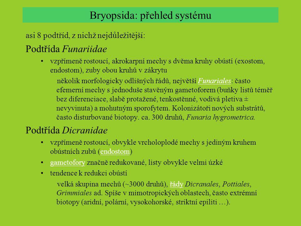 Bryopsida: přehled systému asi 8 podtříd, z nichž nejdůležitější: Podtřída Funariidae vzpřímeně rostoucí, akrokarpní mechy s dvěma kruhy obústí (exostom, endostom), zuby obou kruhů v zákrytu několik morfologicky odlišných řádů, největší Funariales: často efemerní mechy s jednoduše stavěným gametoforem (buňky listů téměř bez diferenciace, slabě protažené, tenkostěnné, vodivá pletiva ± nevyvinuta) a mohutným sporofytem.